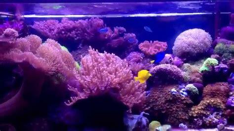 Soft Aquarium reef tank 4ft coral reef trigger tangs manderin cromis sps