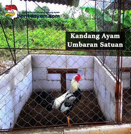 Alas Pasir Kandang Ayam inilah cara membuat dan ukuran kandang ayam bangkok