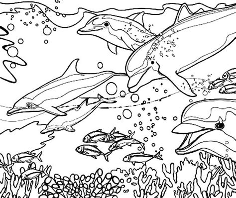 coloring pages of reef fish dolphin coloring pages coral reef fish dolphin coloring