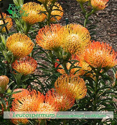 nomi fiori di co come si chiama diamo un nome a fiori e piante 2 fiori