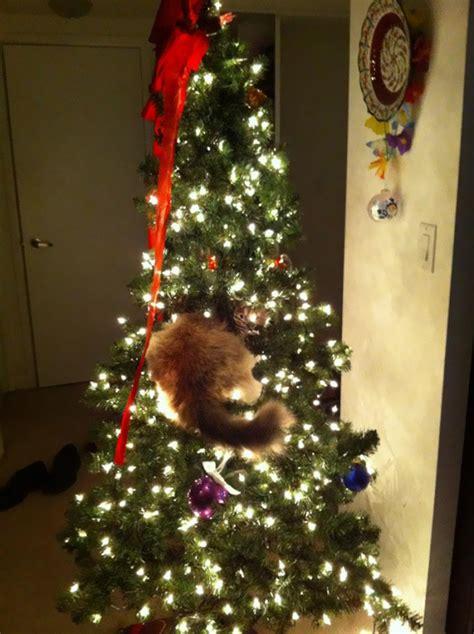 15 cats helping decorate christmas trees bored panda