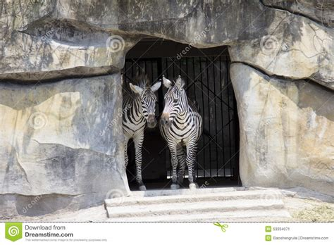 zebra house zebra stock photo image 53334071
