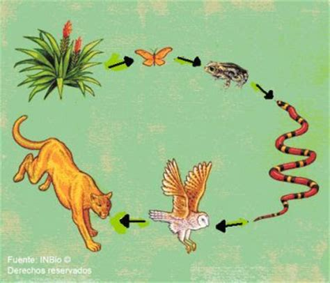 ciencias biologicas cadenas alimentarias