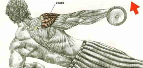bodybuilding wizard  art science  building muscles