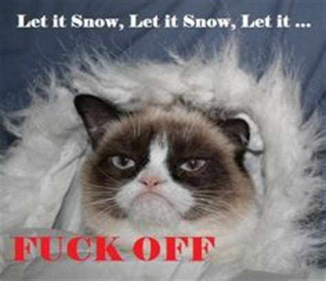 Grumpy Cat Snow Meme - 1000 images about sarcastic quotes on pinterest sarcasm
