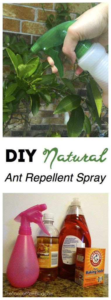 25 best ideas about ant repellant on