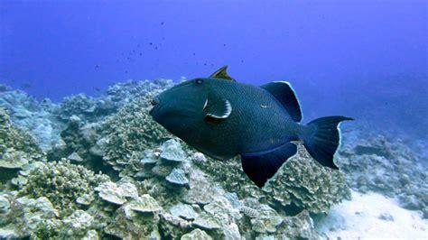 dive cook islands cook islands diving and snorkelling