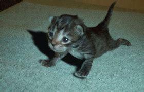 imagenes gif haciendo ejercicio gif gatito haciendo flexiones gifs e im 225 genes animadas