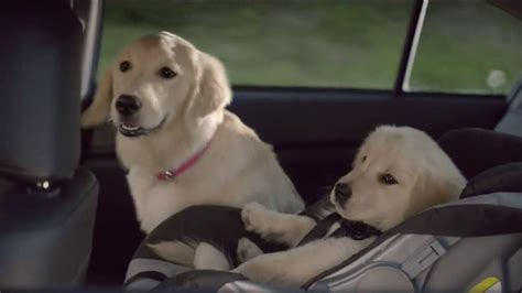 puppy commercial 2014 subaru commercial breeds picture