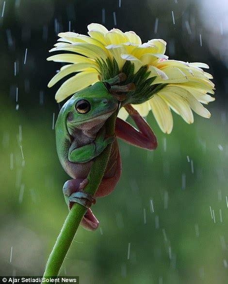 pictures capture amphibians  flowers  umbrellas