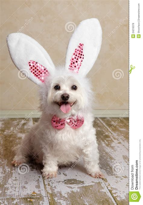 bunny ears for dogs puppy wearing bunny rabbit ears costume royalty free stock beds and costumes