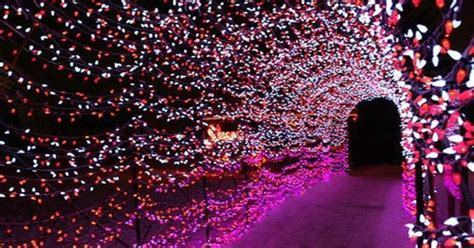 5 magical places in calgary to see christmas lights this