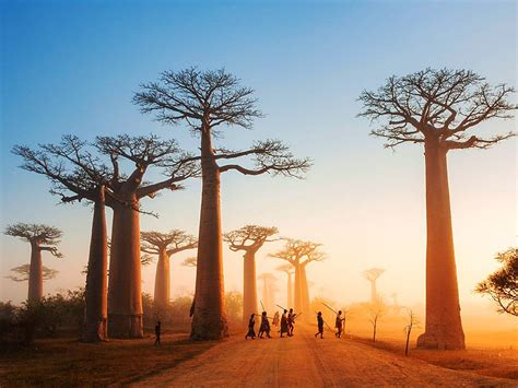 neptune blog top tourist attractions  madagascar
