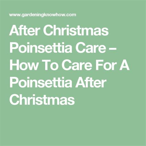 after christmas poinsettia care how to care for a poinsettia after christmas after christmas