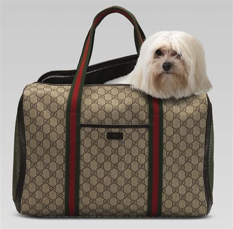 puppy bags katy perry in chanel sweatsuit and brand carrying gucci bag upscalehype