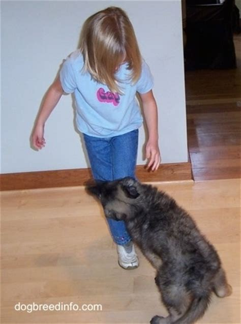 puppy jumping and biting teaching puppies and dogs to respect the