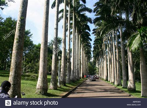 Aburi Botanical Gardens Are A Short Distance From Accra Aburi Botanical Gardens