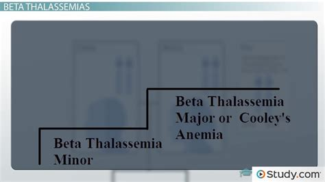 sle resume for agriculture graduates thalassemia causes types and treatments