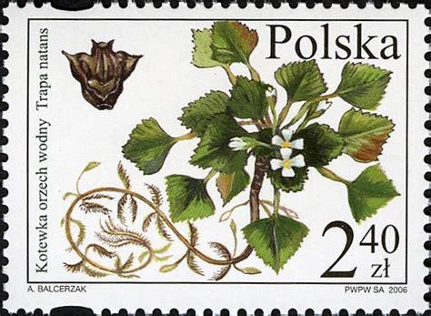 Psychoaktive Pilze Im Garten by Pflanzen In Nanopics Tiere Und Pflanzen Rote Buch