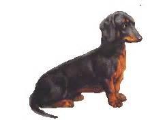 de las yales gifs no apto para epilepticos im 225 genes taringa mascotas peluqueria canina razas perritos perdidos etc