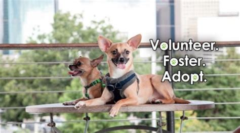 Psa Support Pets Alive by Newsletter Houston Pets Alive