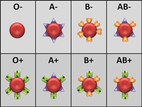 Exclusive Golongan Darah Anti A berbagai sel darah dan fungsinya ilmu pengetahuan dan