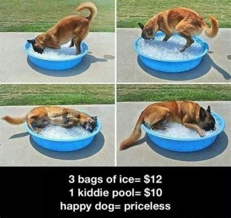 kiddie pool for dogs happy in kiddie pool of cats and other animals