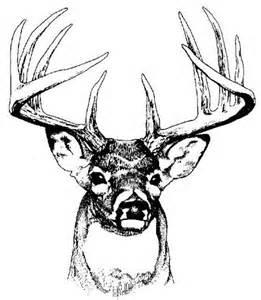 Deer Head Clip Art Jos Gandos Coloring Pages For Kids sketch template