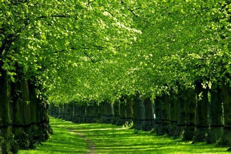 camino verde camino verde 10415