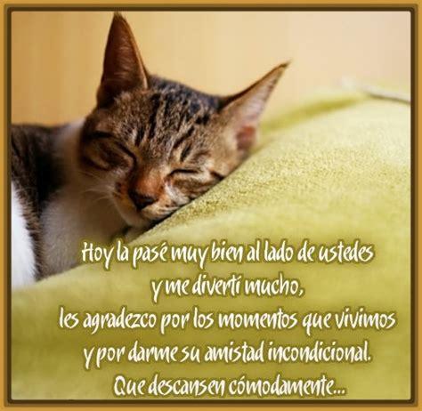imagenes romanticas de gatos fotos de gatos graciosos con frases archivos gatitos tiernos