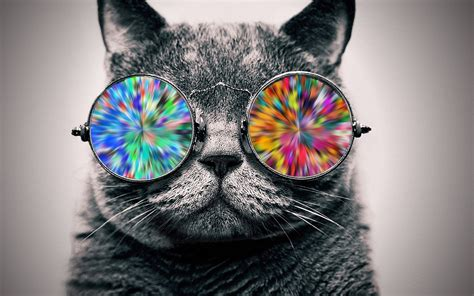 wallpaper cat with sunglasses wallpaper animals sunglasses glasses selective