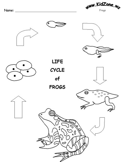 frog activity sheet frog life cycle