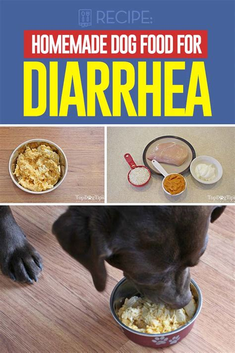 Food For Dogs With Stools by Food For Diarrhea Recipe