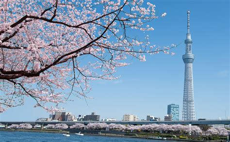 flights to tokyo haneda airline tickets airfare