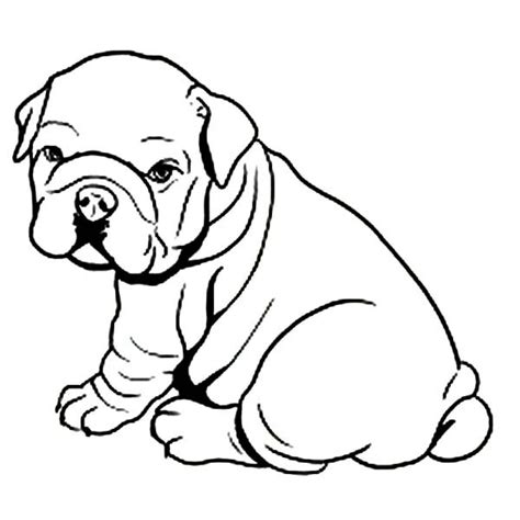 Coloring Pages Bulldog Bulldog Coloring Pages