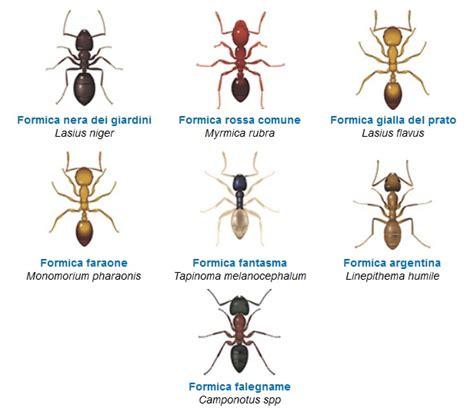 Eliminare Le Formiche by Come Eliminare Le Formiche Dalla Casa Prevenzione E