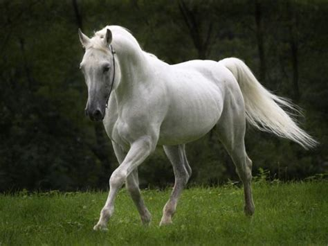 nice hourse top 13 photos of beautiful horses mostbeautifulthings