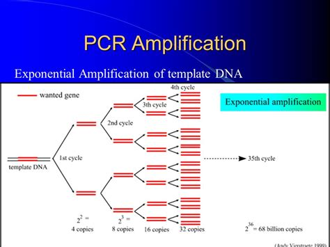 pcr template amount introduction to pcr polymerase chain reaction ppt
