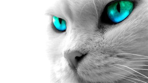 cat eyes wallpaper hd cat eyes wallpaper wallpapersafari