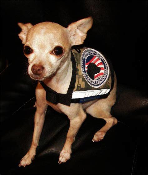 small service dogs xx small and x small camo service vest