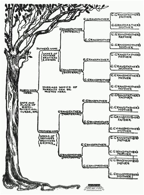 genealogy tree template 25 best ideas about family trees on family