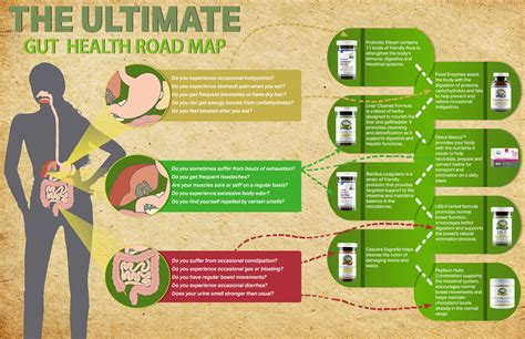 heal your gut the ultimate beginnerã s heal the ultimate gut health road map nature s
