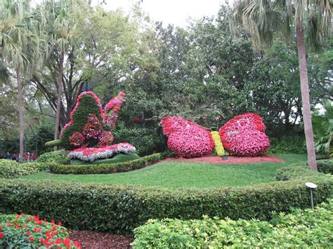 florida flower garden panoramio photo of flower butterfly at busch gardens ta