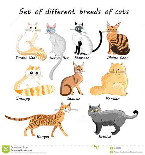 different races of dogs ensemble de vecteur de races de chat illustration de