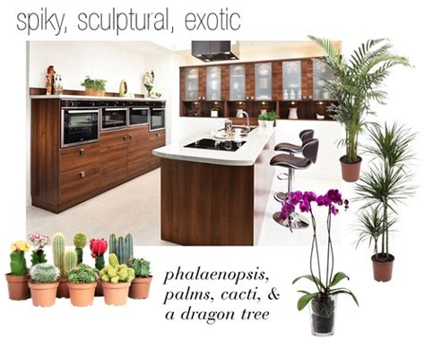 plants in the kitchen perfect plants for perfect kitchens dear designer