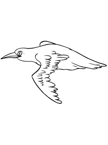 black bird coloring page how to draw black birds
