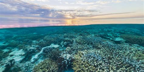 google images water street view treks great barrier reef about google maps