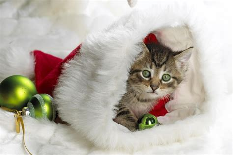 images of christmas animals 2015 funny animal christmas pictures images photos
