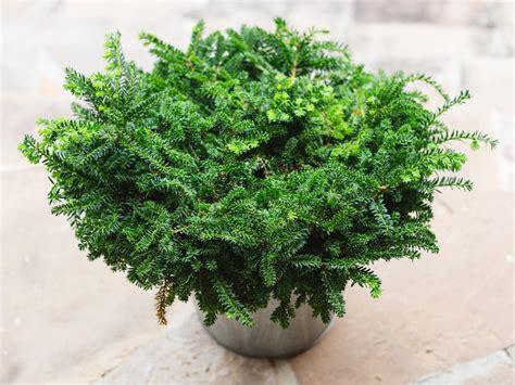 winter friendly patio plants landscaping ideas
