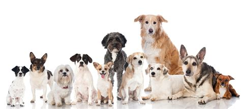 lots of dogs cedar bend humane society employment opportunities